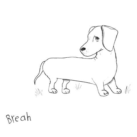 dachshund-illustration.png?w=540