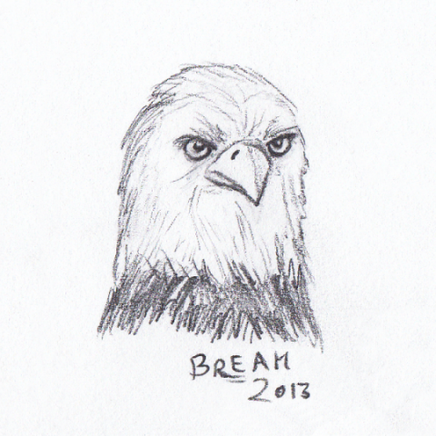 American Bald Ealge head sketch