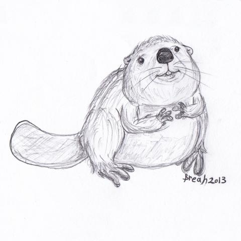 Beaver Sketch