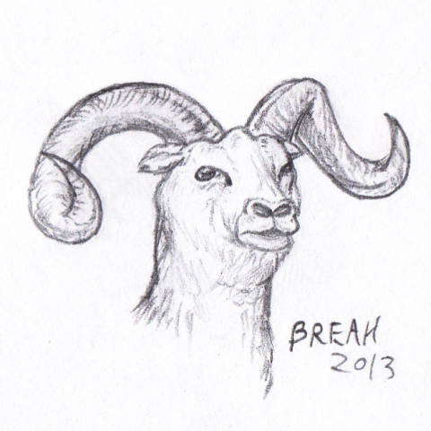 Big Horn Sheep pencil sketch