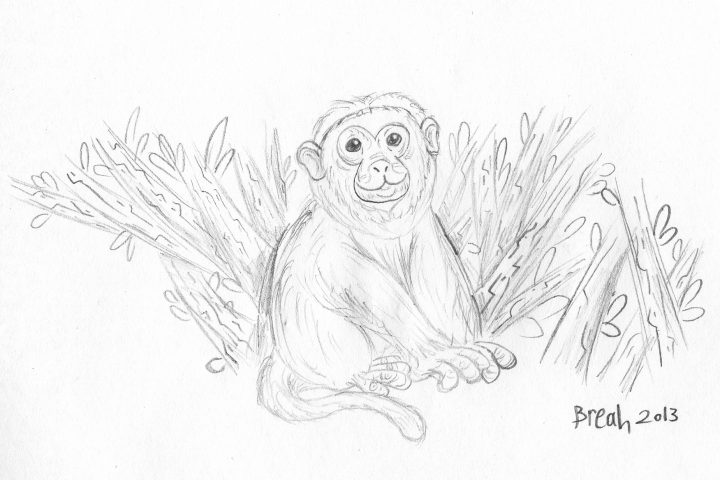 Capuchin Monkey sketch