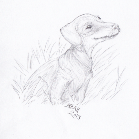 Dachshund sitting sketch