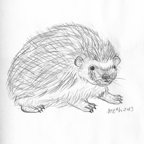 Hedgehog Sketch