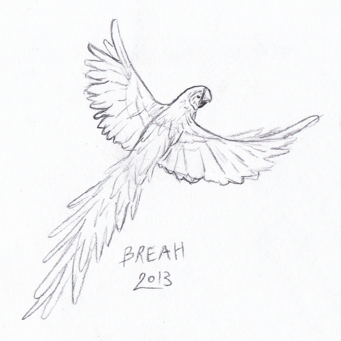 Parrot in Flight sketch