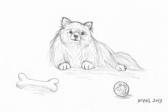 Pomeranian dog sketch