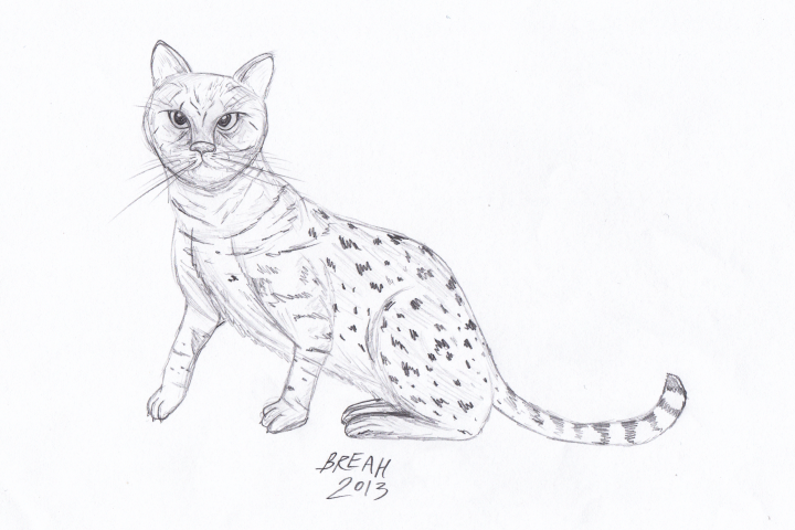 Savannah Cat sketch