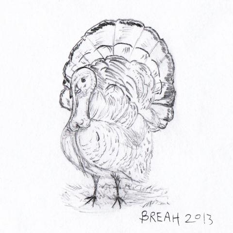 Sketches Wild Wild Turkey Pencil Sketch