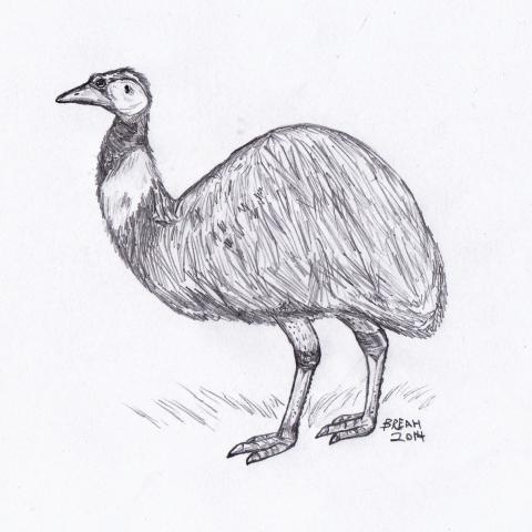Emu Sketch   Art By Breah