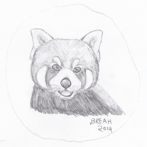 Red Panda or Firefox