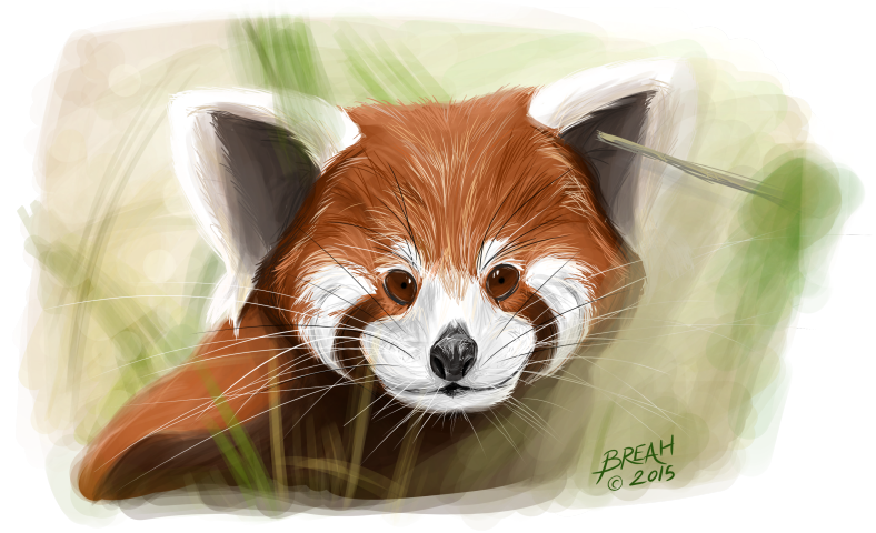 Red Panda Painting Small