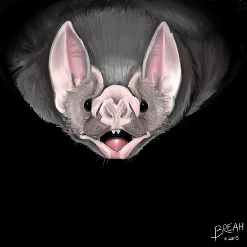 Vampire Bat Painting