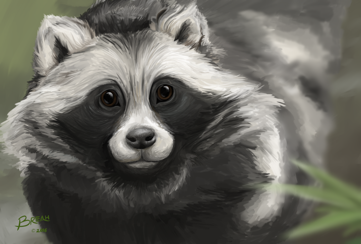 Tanuki (Japanese raccoon dog) Painting