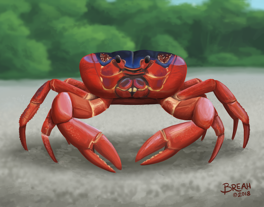 Christmas Island Red Crab.Christmas Island Red Crab Art By Breah