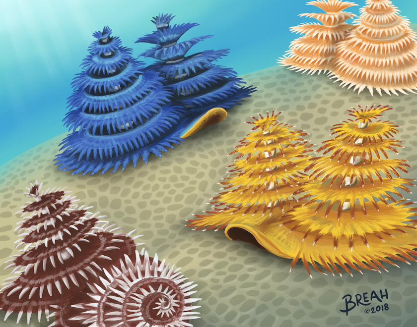 Christmas Tree Worms Art By Breah