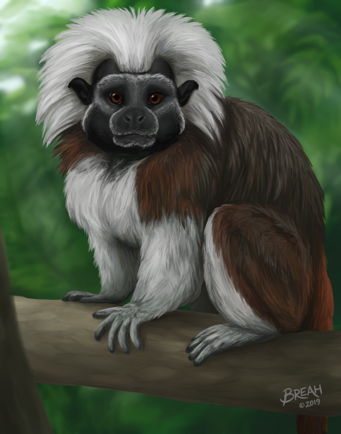Cotton-Top Tamarin Painting